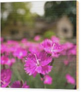 Flowering In The Front Wood Print