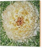 Flowering Kale Wood Print