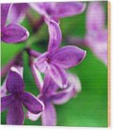 Flowering Lilac Wood Print
