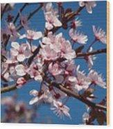 Flowering Of The Plum Tree 5 Wood Print