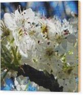 Flowering Pear Wood Print