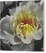 Flowering Peony In The Night Garden Wood Print