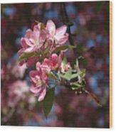 Flowering Pink Dogwood Wood Print
