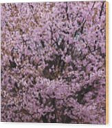 Flowering Pink In Spring Wood Print