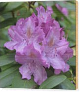 Flowering Pink Rhododendron Blossoms On A Bush Wood Print