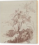 Flowering Plant With Buds Wood Print
