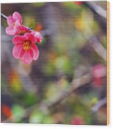 Flowering Quince In Spring Wood Print