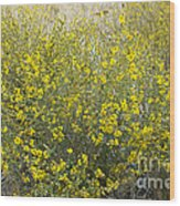 Flowering Tarweed Wood Print