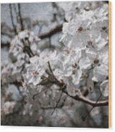 Flowering Tree Wood Print