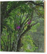 Flowering Trees Near The Path Wood Print
