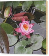 Flowering Water Lily Wood Print