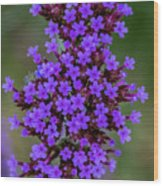 Flower_lavender 1072v Wood Print
