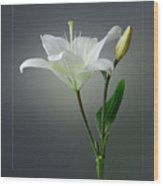 Flower..one Wood Print