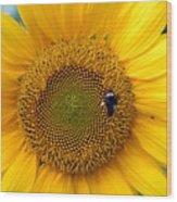 Flowers 188 Wood Print