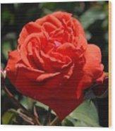Flowers 702 Wood Print