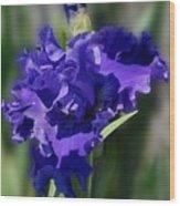 Flowers 734 Wood Print
