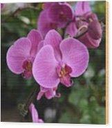 Flowers 820 Wood Print