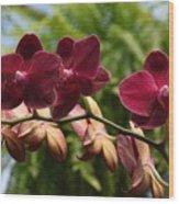Flowers 823 Wood Print