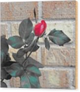 Flowers And Bricks Wood Print