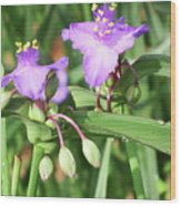 Flowers And Raindrops Wood Print