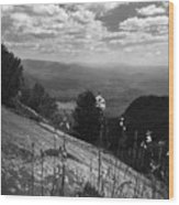 Flowers At Table Rock Overlook In Black And White Two Wood Print