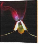 Flower's Aura Wood Print