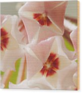 Flowers-hoya 1 Wood Print