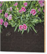 Flowers In Grass Growing From Natural Clean Soil Wood Print