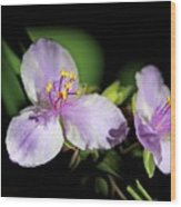 Flowers In Natural Light Wood Print