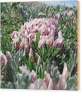 Flowers In The Alpine Tundra Wood Print