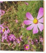 Flowers In Washington Park Wood Print