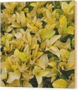 Flowers Of Domitilla Wood Print