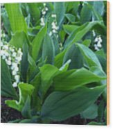 Flowers Of Hapiness Wood Print