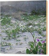 Flowers Of Ocotilla Wood Print