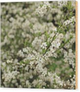Flowers On A Plum Tree Wood Print