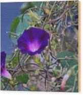 Flowers On Dupont Street Wood Print