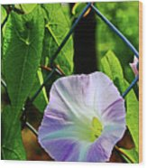 Flowers On The Fence 1 Wood Print