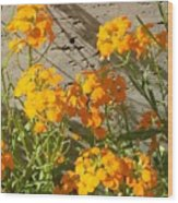 Flowers Orange 2 Wood Print by Warren Thompson