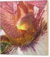 Flowerscape Pink Iris One Wood Print