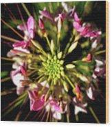 Flowerworks Wood Print