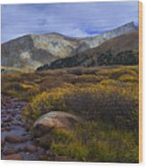 Flowing From Bierstadt Wood Print by Barbara Schultheis