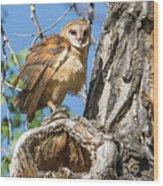 Fluffed Up Barn Owl Owlet Wood Print