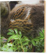 Fluffy As A Duck Wood Print