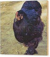 Fluffy Chicken Wood Print