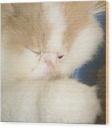 Fluffy Kitten Wood Print