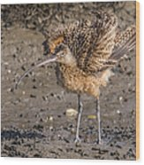 Fluffy Long-billed Curlew Wood Print
