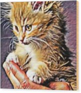 Fluffy Orange Kitten Wood Print