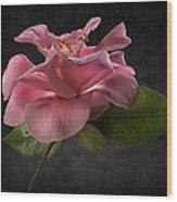 Fluffy Pink Camellia 2 Wood Print