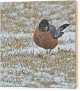 Fluffy Robin In Snow Wood Print