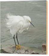 Fluffy Snowy Egret Wood Print